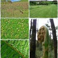 Weekly Photo Challenge: Green