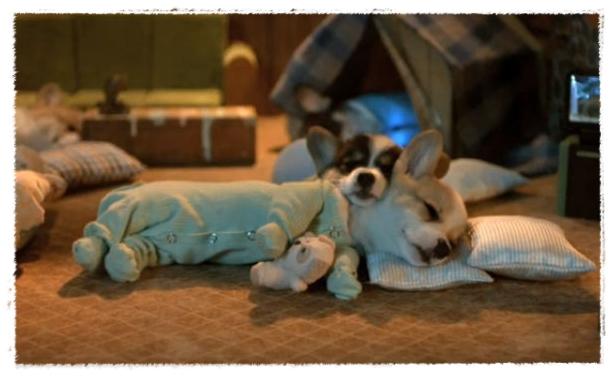 corgi_pyjamas