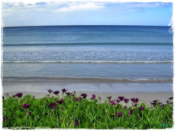 Port Fairy East Beach