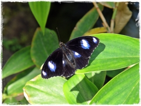 Beautiful Butterfly (III)