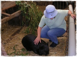 My mum with a cuddly wombat! :)