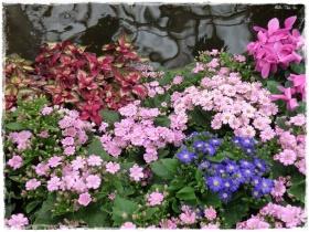 Flowers, Fitzroy Gardens