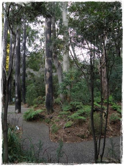 Rainforest Installation (II)