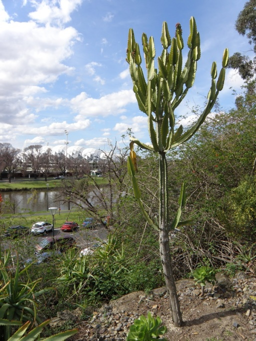 Glimpsing the Yarra River from the Botanical Gardens