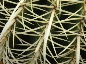 Cacti Abstract I