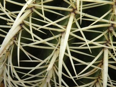 Cacti Abstract I