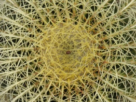 Cacti Abstract II