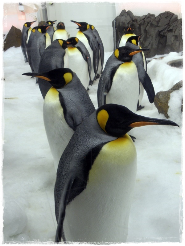 Penguins! :D