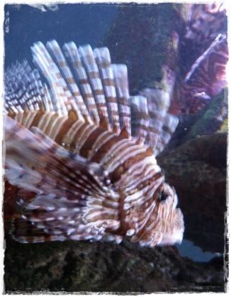 Funky striped fish! (I)