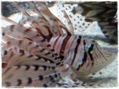 Funky striped fish! (II)