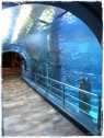 Part of the giant shark tank!
