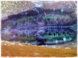 Crocodile Abstract!