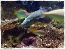 Fast moving fish!