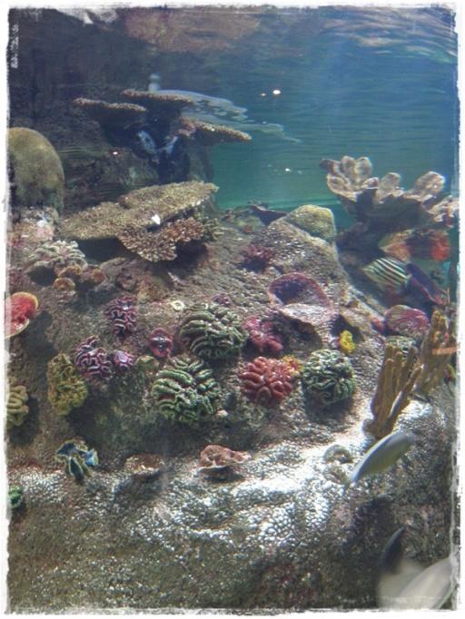 Coral Reef (II)