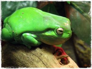 Frog! Ribbit!