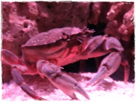 Big crab!
