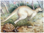 The Kangaroo and the Tortoise (Madeleine Winch)