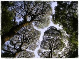 Otway Rainforest, Victoria